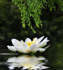 Incontri di meditazione Counseling Formazione Persona