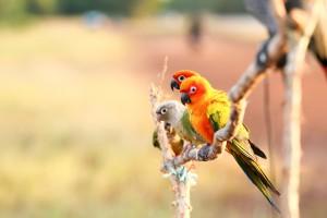 animali animali artemisia counseling