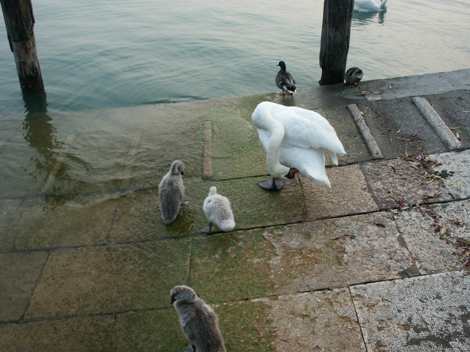 Nuove famiglie e relazioni famigliari